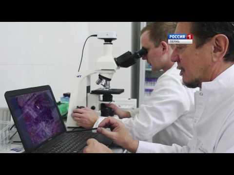 Лекарство от диабета в Перми: ученые заручились господдержкой