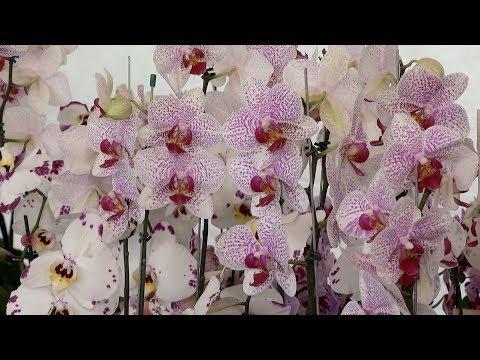 DIVINÓPOLIS: Visite a exposição de flores de Holambra