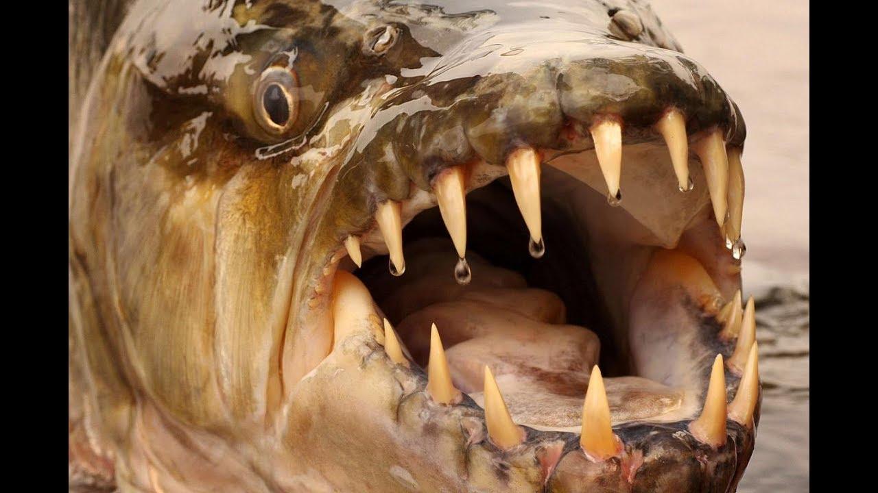 10 tra i pesci pi pericolosi del mondo youtube