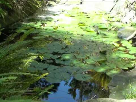 Quail Botanical Gardens, Encinitas, California