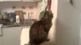 Кошка залипла в стену