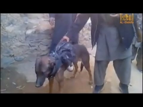 Taliban fighters 'capture' military dog