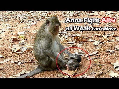 MG!Bad Mum, Anna Fight - Step On Alba Till Weak Can't Move Out  Anna Fight Alba To Stop Get Her Milk