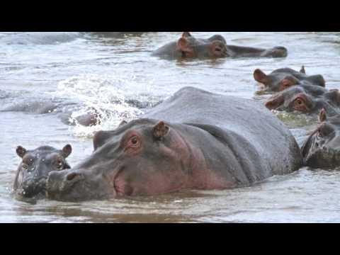 Serengeti Expedition 2016 - Episode 2