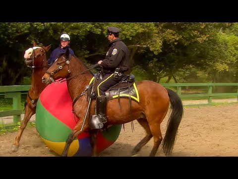 How are police horses chosen to become the highly trained and trusted steeds that they are?Via BBC Earth,watch the police horse testing…