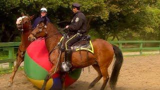 Police Horse Training - Extraordinary Animals - Series 2 - Earth