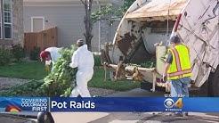 Police Bust Marijuana Grow Operations Across Northern Denver Metro Area