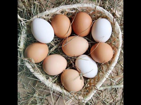 Дрожжи!! Как повысить яйценоскость кур зимой, осенью, весной!!! Простой способ!!!