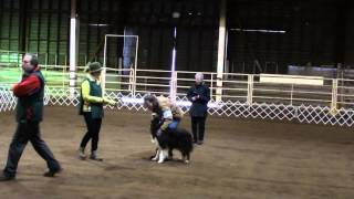 Ryder And Dorene.  Novice B Obedience.  Sherwood Dog Trials.  4/26/14.  Title Run!