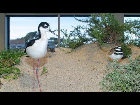 Live Aviary Cam - Monterey Bay Aquarium
