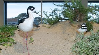 Live Aviary Cam - Monterey Bay Aquarium