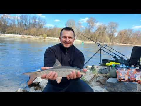 Download Pescuit la Mreana pe Dunare in Germania cu Iulian Lupus