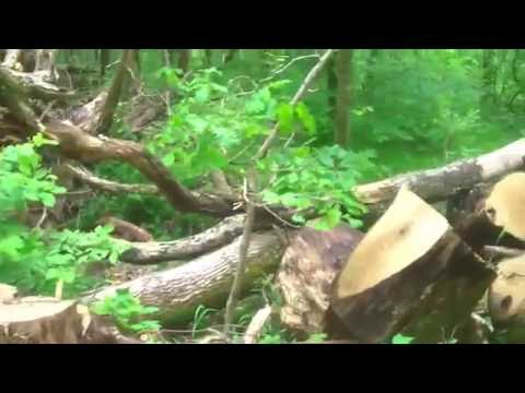 Daniel Boone - Wilderness Road Trail - Cumberland Gap National Park