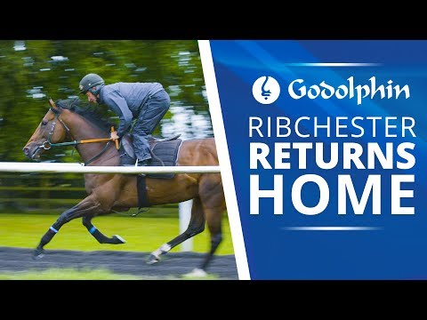 Ribchester returns home after Royal Ascot glory