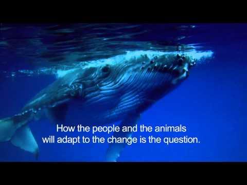 Sitka WhaleFest 2013