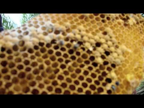 bees-jp-miller-total-pest-control-solutions