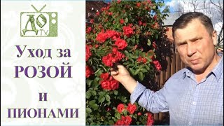 видео Вьющиеся древесные растения » Садоводу, дачнику, огороднику.