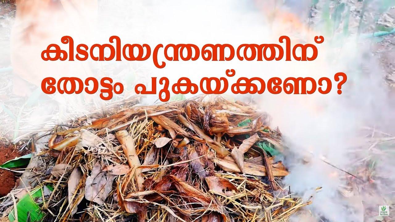 പുകയിടല്: തോട്ടം വൃത്തിയാക്കാം, കീടങ്ങളെ  തുരത്താം | Traditional Pest Control | Farming Tips
