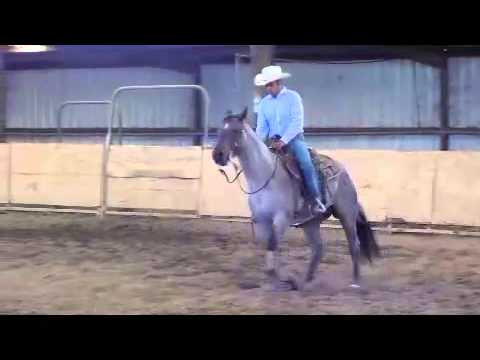 Quarter Horse for sale BurlesonTexas 76028 By Rodney Rosenauer from YouTube · High Definition · Duration:  4 minutes 22 seconds  · 3.000+ views · uploaded on 04.11.2013 · uploaded by BurlesonBusinessTV