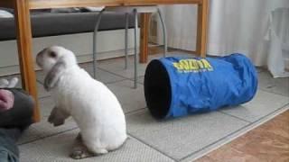 Rabbit Clicker Training