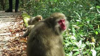 2018年10月13日上高地にて。野生のお猿さんですが、近くによっても平気...