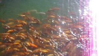 Crazy fish in Vietnam