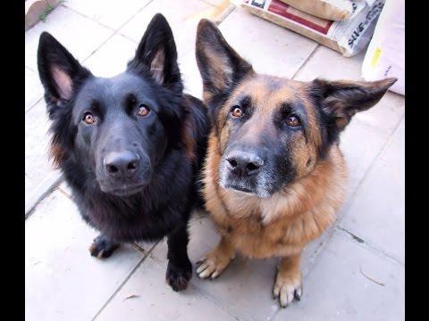 Введение В Собаковедение Все Серии