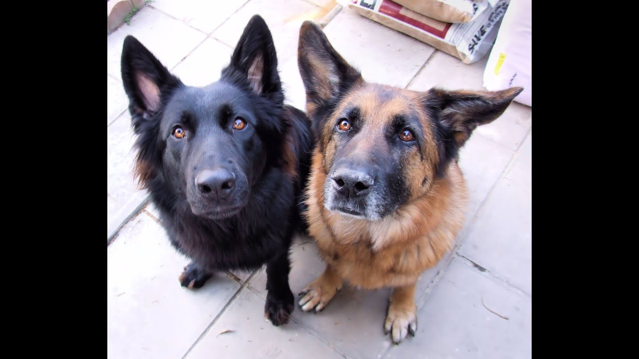 Dog Training Tutorial Building Eye Contact And Attention