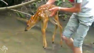 Kids Rescue Baby Deer Stuck In A Creek