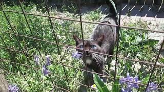 черный кот с ярко синими глазами