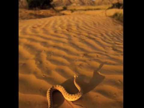 40 Days  LENT  Desert Voice