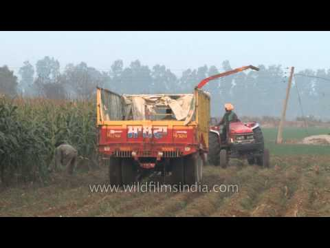 Silage harvester in the fields of Ludhiana