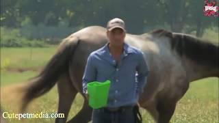 Приколы 2018 видео с лошадьми