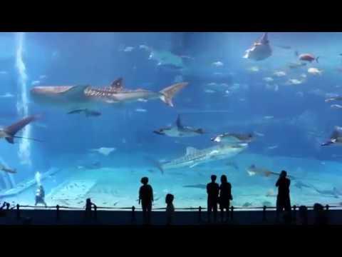Болезни аквариумных рыбок