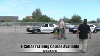 Dog Squad - Law Enforcement Seminar