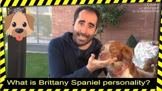 DOGS: What is Brittany Spaniel personality?