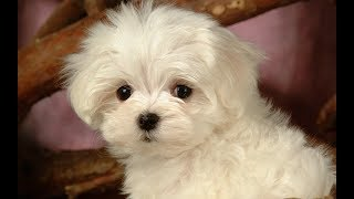 Cute Dogs and Cats Compilation 2018 #37
