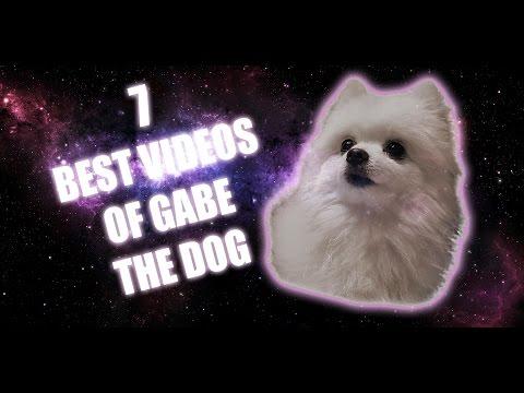 7 BEST VIDEOS OF GABE THE DOG - FryeConnor