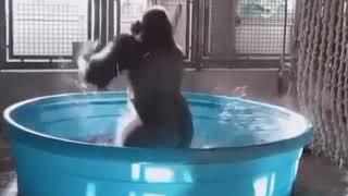 dönen goril 😎😎