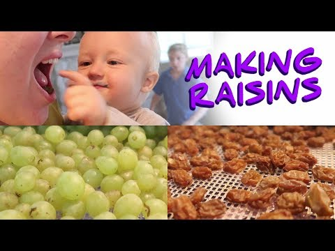 Making Raisins - Turning Grapes from our Garden into Raisins!