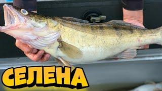 Рыбалка 2020, Ловля СУДАКА на ДЖИГ, Джиг, Судак