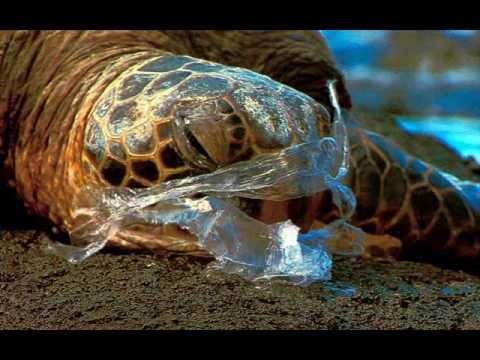 Plastic Bag Pollution - YouTube