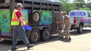goat and llama rescue by palatine rural firefighters after escape from trailer