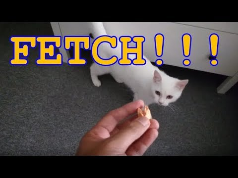 Cat playing fetch!