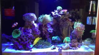 jbj 45 rimless reef tank