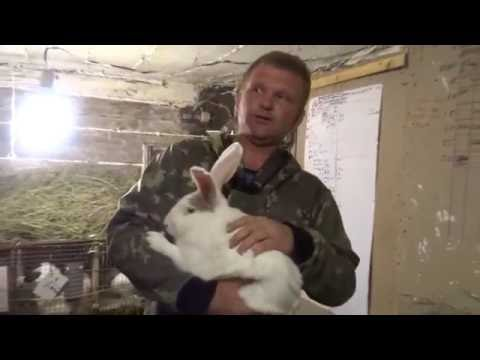 Продаю кроликов.