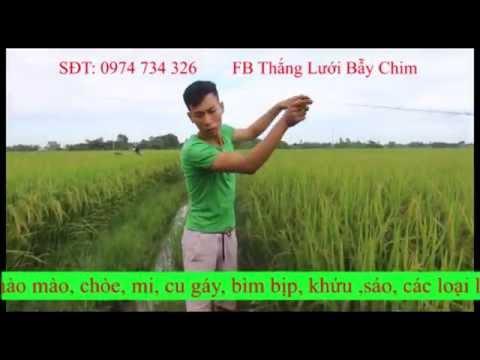 Bán lưới bẫy chim giá rẻ - LH 0974 734 326 - Lưới bẫy chim đêm