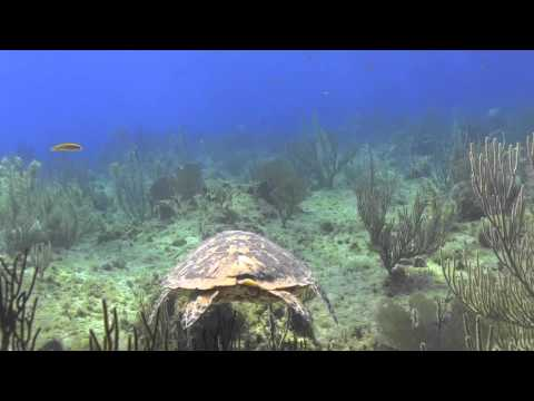 Scuba Diving with a turtle: your moment of zen - Action Scuba Montreal