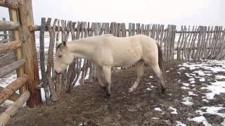 Horse in round corral, settling down