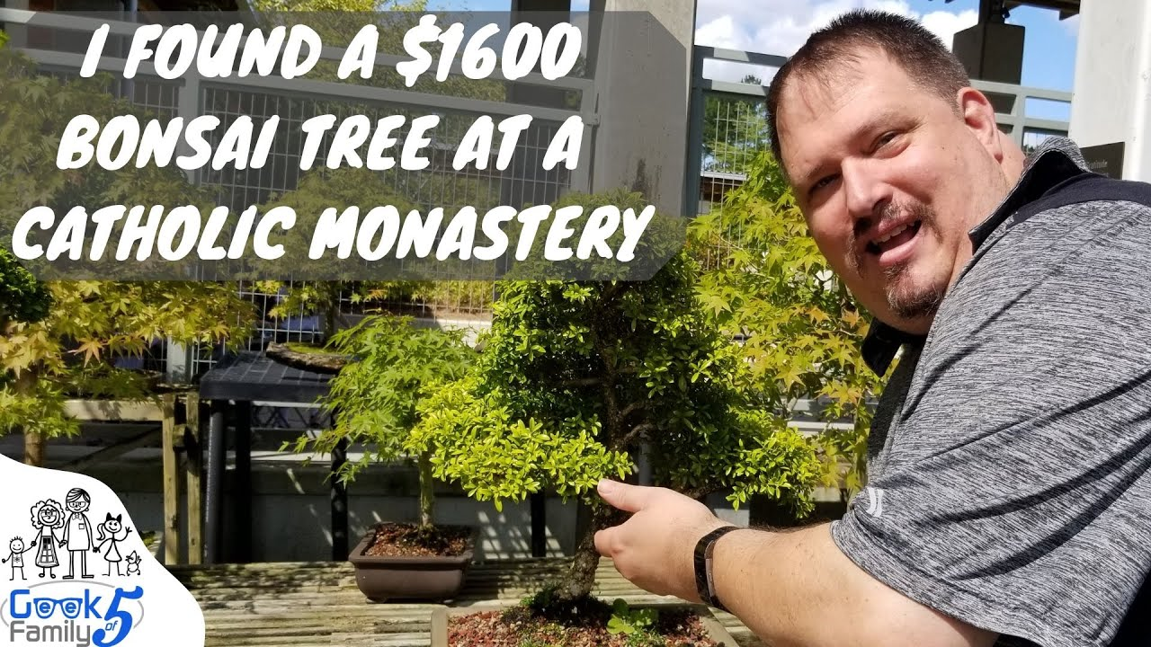 I Found A 1600 Bonsai Tree At A Catholic Monastery A Geek Family Adventure Youtube